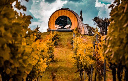 VinX / Medici冒险利用区块链重塑葡萄酒业